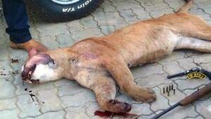BONITO (MS): Policiais prendem caçador que abateu espécie em extinção de onça-parda