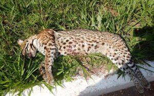 Bonito terá radares nas rodovias para reduzir morte de animais silvestres