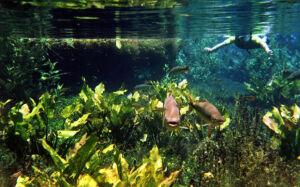 BONITO e Pantanal são exposto entre as belezas do Centro-Oeste na reta final das Olimpíadas no Rio