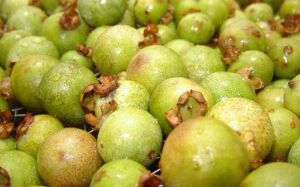 Guavira de Bonito é citada e Deputados aprovam projeto que deve se tornar o fruto símbolo de MS
