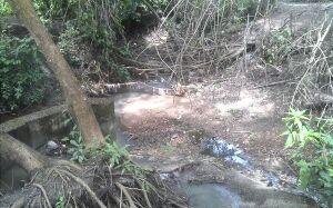 Empresa é multada em R$ 80 mil por contaminação em córrego de Bonito