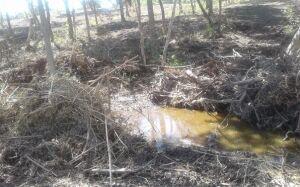 Douradense é autuado em R$ 37 mil por desmatamento de 7 hectares de vegetação nativa em Bonito (MS)