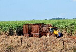Governo de Mato Grosso do Sul  é contrário à venda direta do etanol