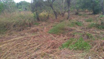 Cerca de 680 proprietários são notificados para limpeza de terrenos em 2020 em Bonito (MS)