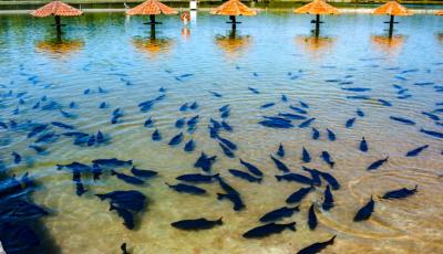 IDB INFORMA: na Praia da Figueira você encontra diversão, tranquilidade e segurança