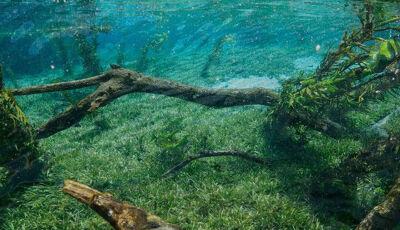 Vai viajar com a família para Bonito MS? Conheça o Córrego Azul!