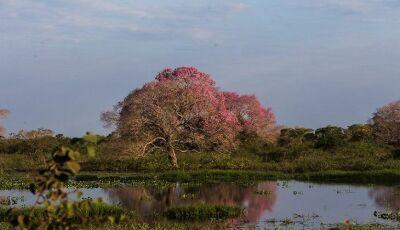 Queimadas no Pantanal não alcançam regiões de pousadas e hotéis fazenda de Mato Grosso do Sul