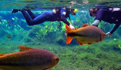 As águas cristalinas de Bonito (MS) são conhecidas por todo o Brasil e em vários outros países