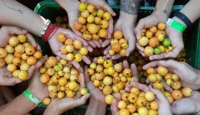Em Bonito, Edição do Cata Guavira vem com agrofloresta e comida vegana como soluções
