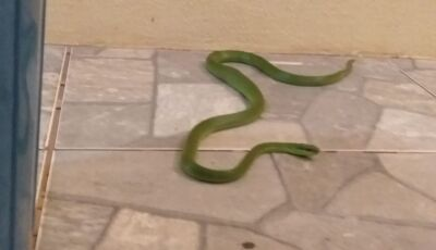 AQUI É ASSIM: PMA captura serpente em agência de turismo em Bonito (MS)