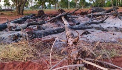 Homem derruba diversas árvores nativas e coloca fogo, PMA autua em Guia Lopes da Laguna