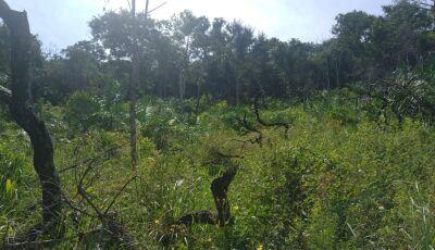 Fazendeiro é multado em R$ 30 mil por desmatamento ilegal de vegetação nativa protegida em Bonito