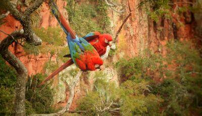 IDB INFORMA: Bonito e região são destaques na CNN em reportagem sobre ecoturismo no Brasil