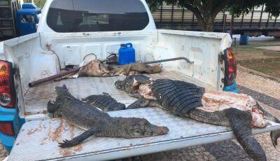 BONITO: PMA encontra jacaré só o couro e a cabeça, projéteis de arma de fogo ajudará na investigação