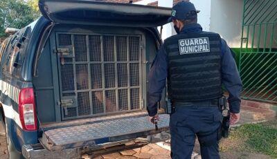 Guarda municipal cumpre 12 mandados de prisão no primeiro semestre em Bonito (MS)