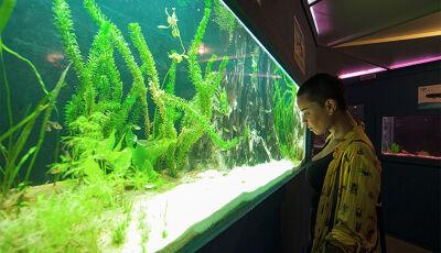 VEM PRA BONITO MS?, O Aquário de Bonito é um passeio inesquecível para crianças e adultos