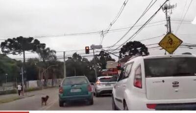 Cachorro é abandonado e corre atrás do carro de donos que o abandonaram, ASSISTA O VÍDEO