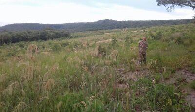 PMA de BONITO autua proprietária rural por desmatar 37 hectares de mata nativa