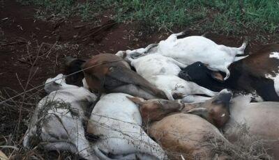 Queda de fio de alta tensão mata dez animais em chácara de Rio Brilhante