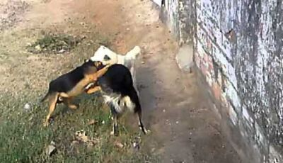 Briga por causa de cachorro termina com assassinato na Capital do Estado