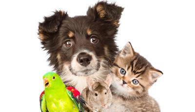 Projeto de lei quer impedir autores de  maus tratos a adotarem novos animais