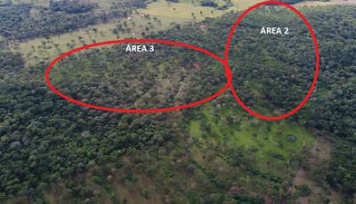 PMA autua fazendeiro em R$ 65,7 por desmatamento ilegal de 55 hectares de vegetação nativa em Bonito