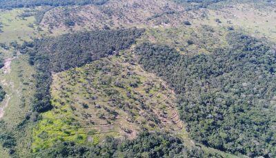 PMA autua fazendeiro em R$ 27 mil por desmatamento ilegal em 3 áreas de vegetação nativa em Bonito
