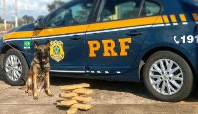 Droga é apreendida com o auxílio de cães farejadores