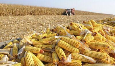 Estiagem derruba produtividade do milho e safra deste ano pode ficar 28% menor