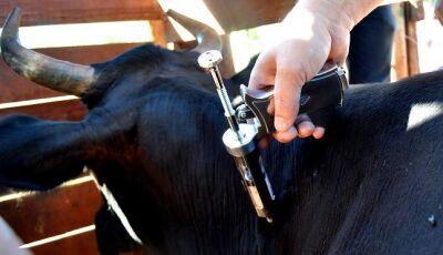 Meta da Campanha contra febre aftosa em MS é de imunização de 8 milhões de animais