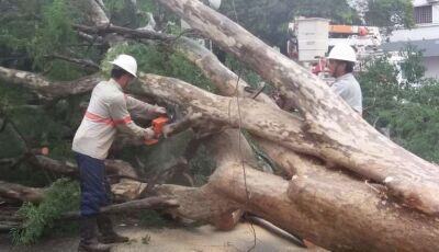 DOURADOS: Fortes ventos derrubam mais de 30 árvores e deixa rastro de destruição, VEJA FOTOS