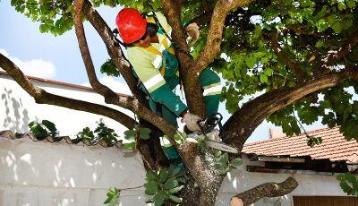 Secretaria convoca podadores de árvores para reunião