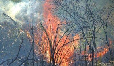 Em 15 dias, cidade de MS lidera ranking de queimadas no Brasil