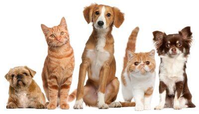 Simpósio sobre Saúde Animal será nesta sexta-feira