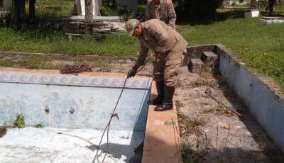 Corpo de Bombeiros resgata jacaré que caiu dentro de piscina em pousada