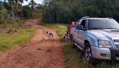 Cinco homens são presos com 19 cães de caça em MS