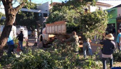 Secretário de Meio Ambiente explica sobre podas de árvores feita em Bonito (MS)
