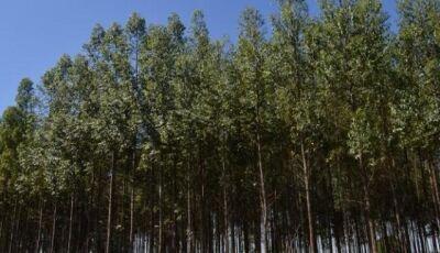 Exportações de produtos florestais em MS cresceram 12% no semestre