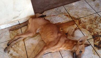 Mulher deixa cachorro morrer de fome e sede em cidade de MS