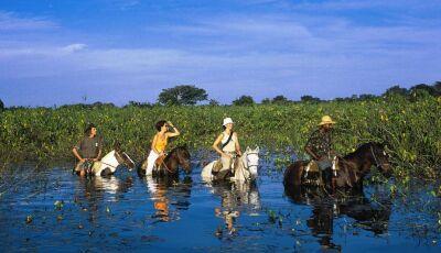 Conheça o Pantanal a apenas duas horas de Bonito (MS)!