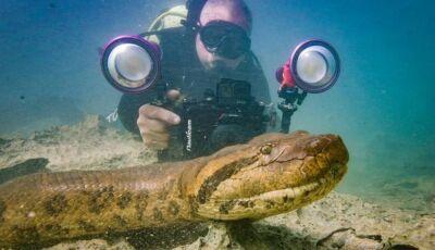 Sucuri 'posa' para foto e até lambe a câmera em rio de águas transparentes do Formoso em Bonito (MS)