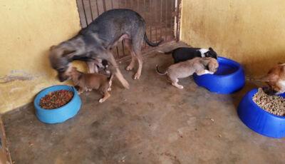 CCZ disponibiliza 10 cães para adoção em Bonito (MS)