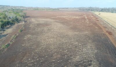 PMA autua infrator em R$ 224 mil por desmatamento exploração ilegal de madeira e incêndio em Bonito