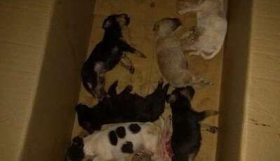 Mulher de 51 anos é multada em R$ 8 mil por deixar cachorros morrerem de calor em MS