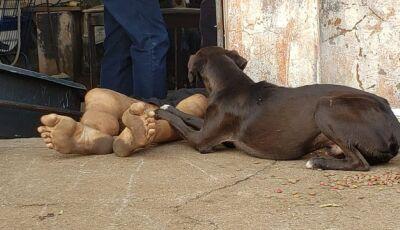 Cachorro é flagrado ao lado de homem morto com facada no pescoço, em MS