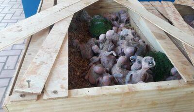 PMA autua em R$ 750 mil traficante de papagaios preso pela Polícia Militar
