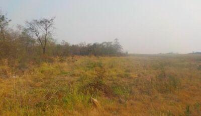 Fazendeira é autuada em quase R$ 500 mil por desmatamento de área protegida