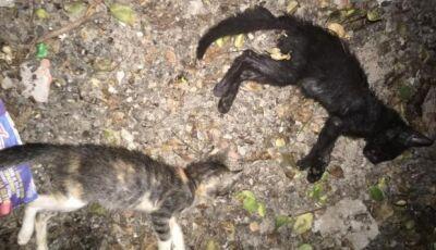Idosa é levada para a delegacia após matar quatro filhotes de gato a pauladas em MS