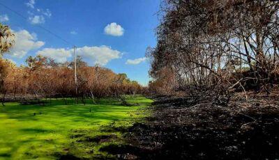 Após incêndios, fenômeno causa paisagem incrível de extremos no Pantanal