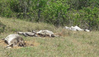 Em fazenda de MS, 23 cabeças de gado são encontradas mortas após passarem fome e sede